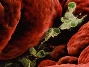 Профилактика от паразитов в организме человека широкого спектра действия
