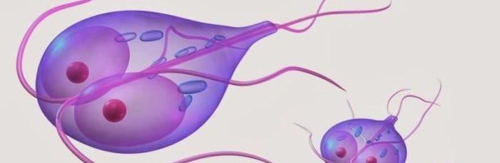 Как происходит анализ на яйца глист