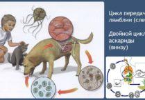 Организм который живёт паразит