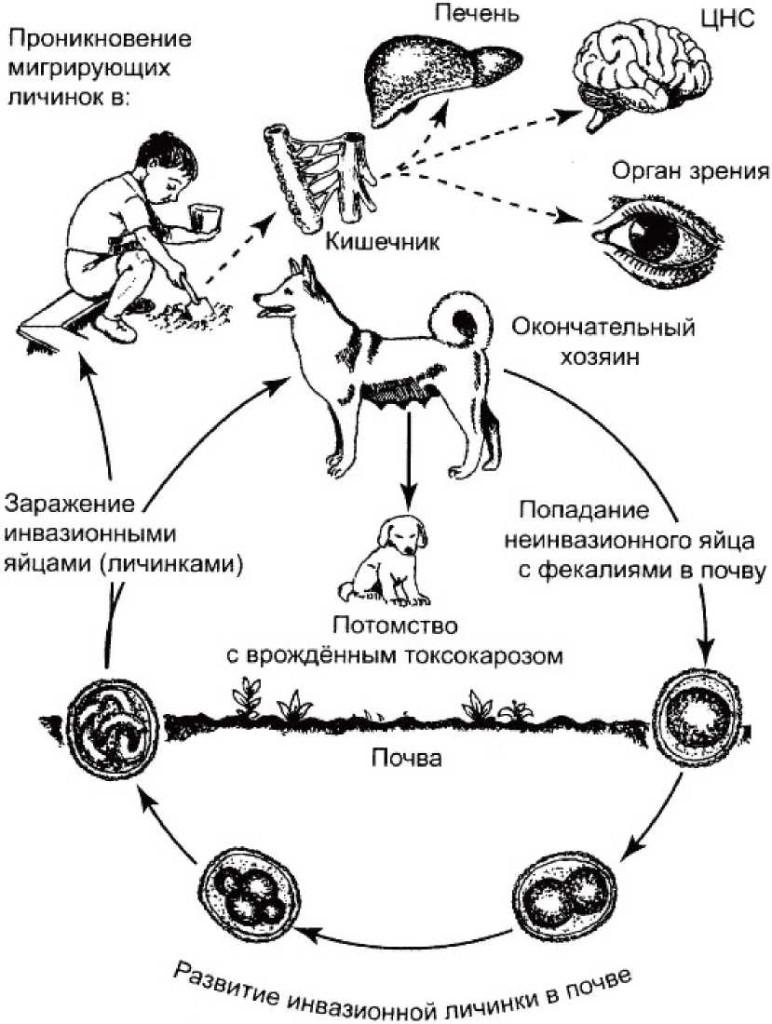 диагностика от паразитов в караганде