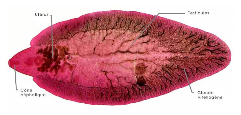 признаки паразитов в организме и лечение