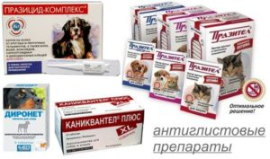 Противоглистные препараты для собак