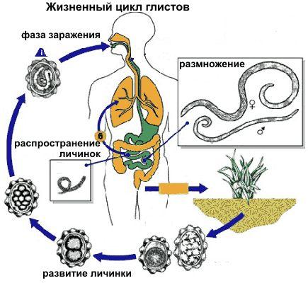 лечение от паразитов перекисью водорода