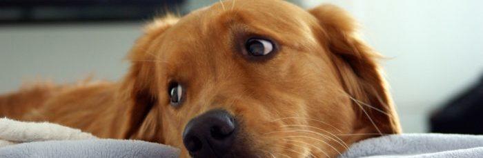 Признаки и лечение глистов у щенка