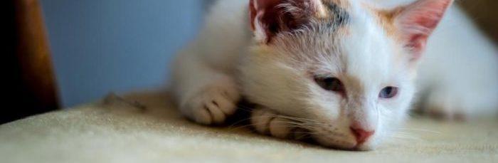 Кот заразил глистами что делать